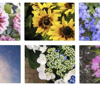 【植物素材】MMT 植物素材 | 植物圖片