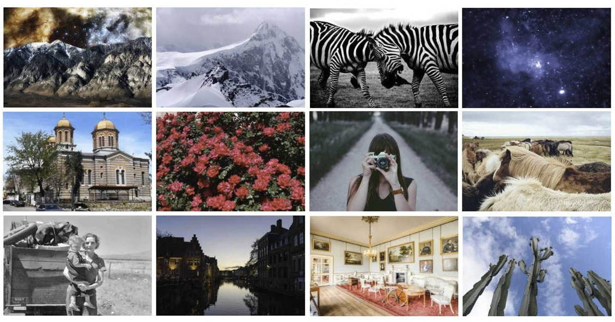 【動物照片】Pickup Image 動物照片 | 圖片素材下載