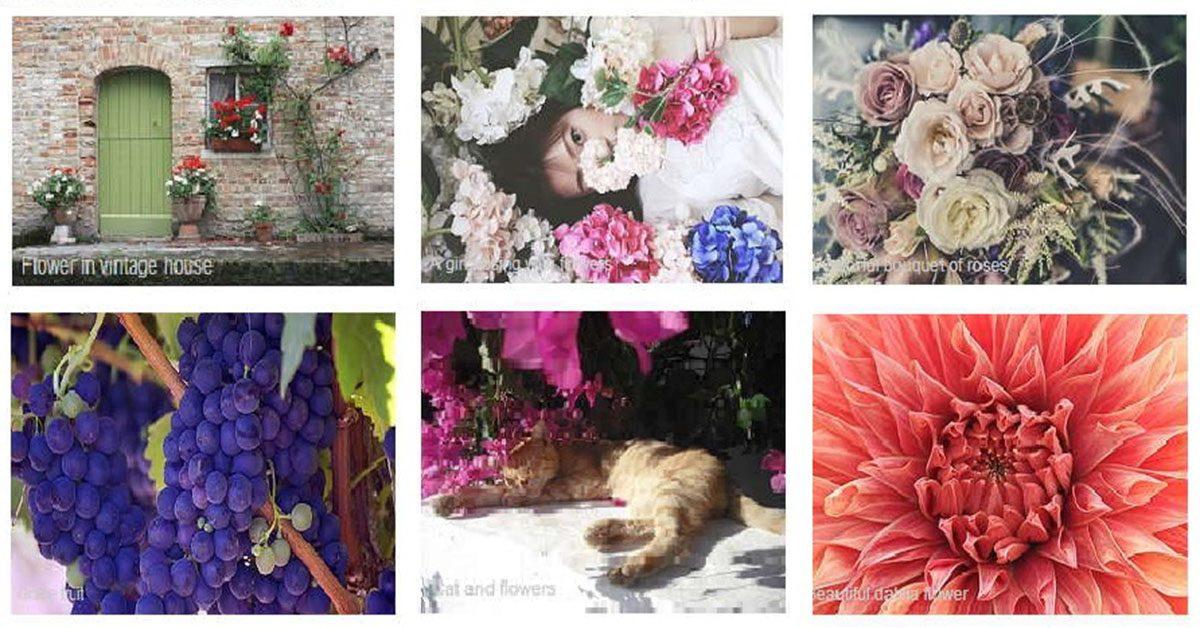 【花朵照片】ABSFreePic 免費細致花朵照片 | 花朵素材下載