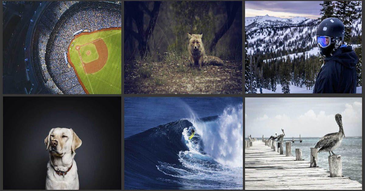 【動物圖片】Skuawk 野生動物圖片 | 熱血的運動照片