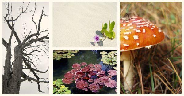 【花朵素材】Stockmediab cc 美麗花朵素材 | 可商用植物圖片