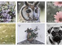 【動物圖片】Photostockeditor 栩栩如生的動物圖片 | 免費花草素材