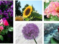 【花朵照片】Abstract Influen 鮮艷的花朵照片 | 植物素材下載