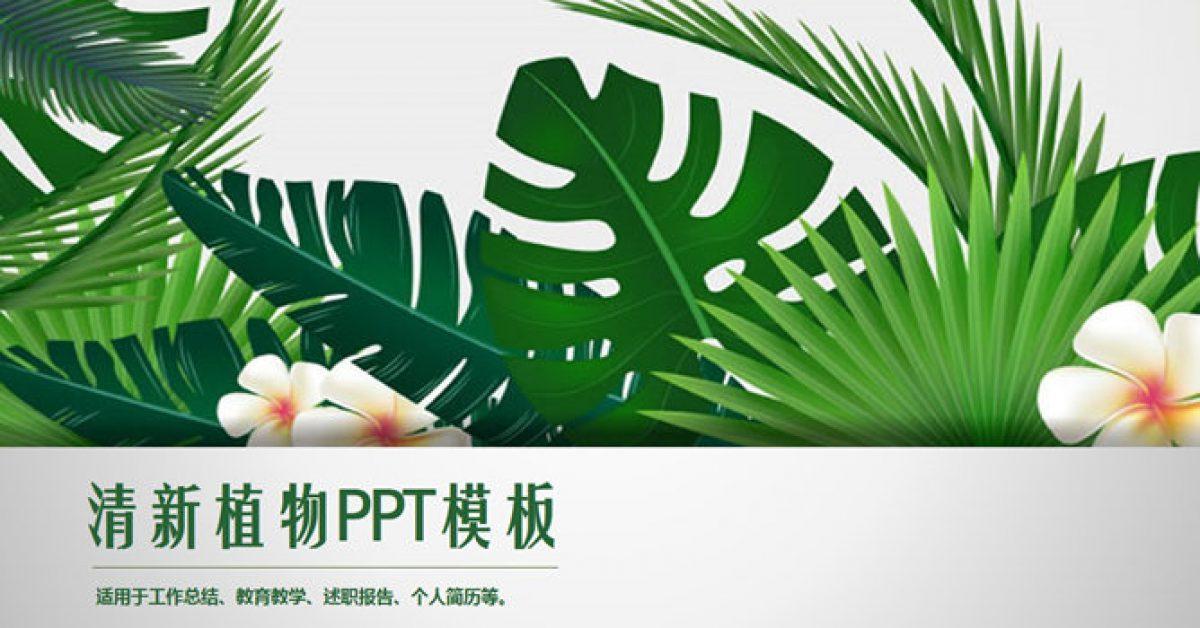 高質感的植物背景powerpoint模板下載,共有32張的可愛植物簡報推薦範例
