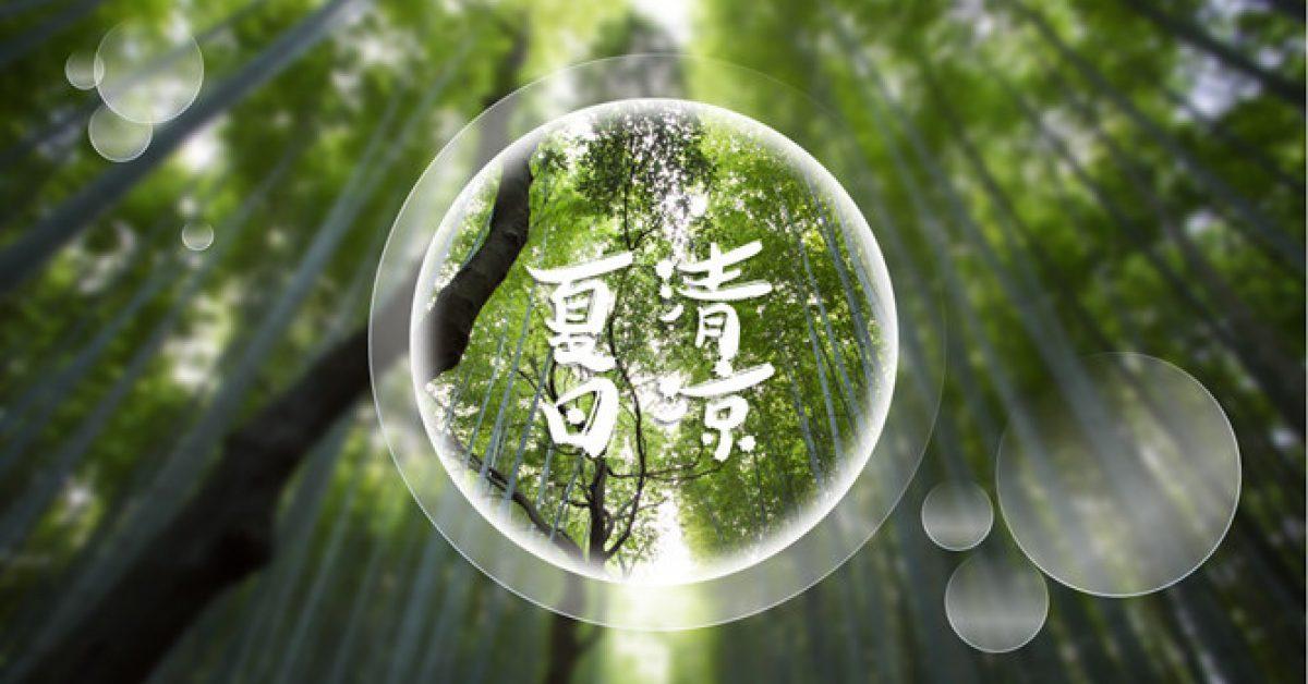 不錯的竹林背景powerpoint模板下載,共有5張的植物模板推薦樣式